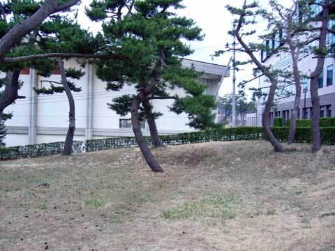 洋野町役場裏の松林
