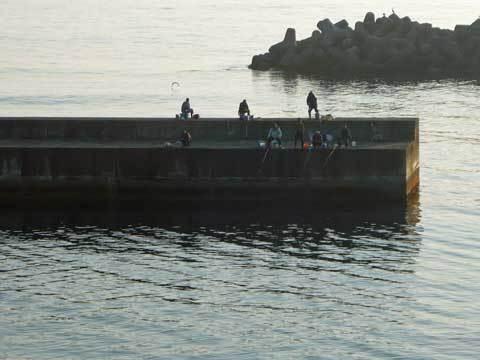 玉川漁港の釣り人