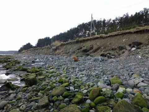 宿戸の海岸