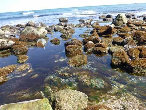 角の浜の海岸