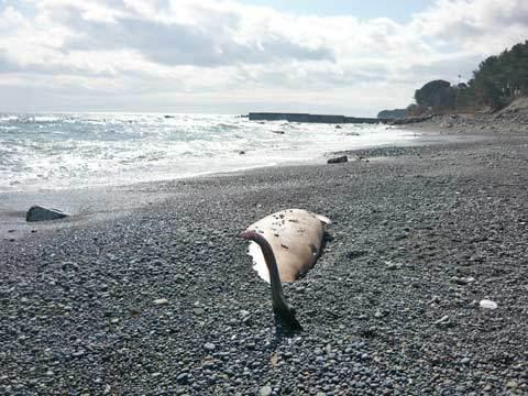 クジラの画像 p1_28