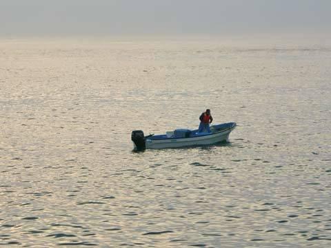 漁を行っている漁船