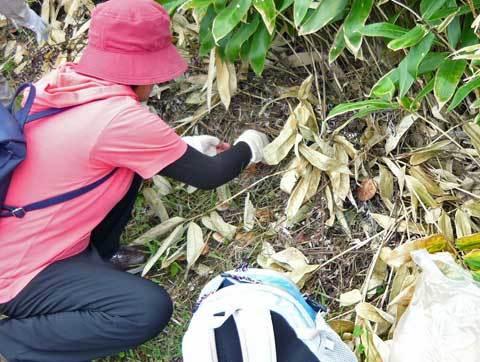 キノコ収穫