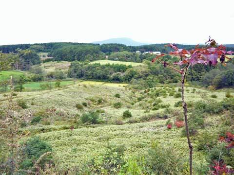洋野町のおおの高原