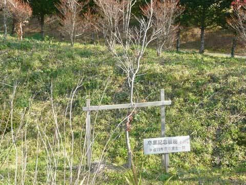 卒業記念植樹