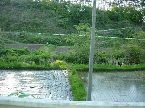 洋野町の田園風景
